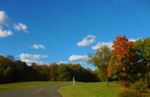 trees changing color in the fall on our beautiful property for campgrounds and temporary workforce housing